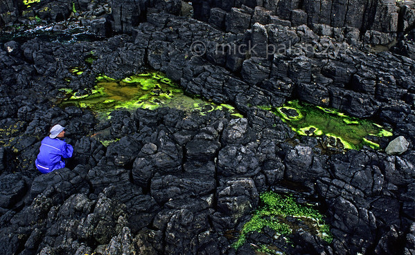 [BRITAIN.HEBRIDES 27785] 'Tidal pools at Bornesketaig.'  	Fluorescent green seaweed in tidal pools on the Skye coast near Bornesketaig forms a stark contrast to the surrounding black basalt. Photo Mick Palarczyk.