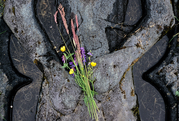 [BRITAIN.HEBRIDES 27812] 'Field bouquet for a knight.'  On Skye's St. Columba's Isle (near Skeabost) a knight clutches his sword with his fist on a carved medieval grave slab. A visitor of the ancient cemetery has added a softer touch by giving him a small field bouquet. Photo Mick Palarczyk.