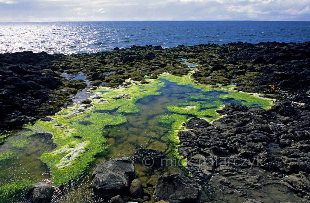 [BRITAIN.HEBRIDES 27783] 'Tidal pool at Bornesketaig.'  A tidal pool on the Skye coast near Bornesketaig lights up with fluorescent green seaweed. Photo Mick Palarczyk.