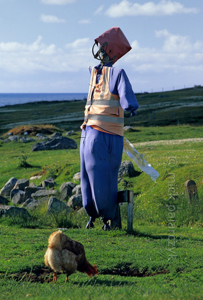 [BRITAIN.HEBRIDES 27668] 'Guarding the chickens.'  	At Islivig on the western shore of Lewis, a scarecrow protects chickens and the eyes of newborn lambs from attacks by sea eagles and rooks. Photo Mick Palarczyk.