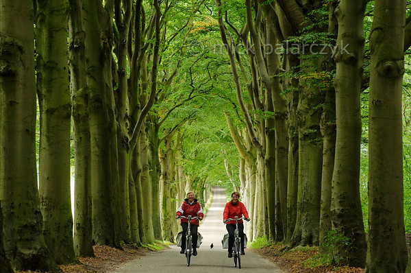 [HOLLAND.FRIESLAND 30172] 'Beech lane in Gaasterland.'