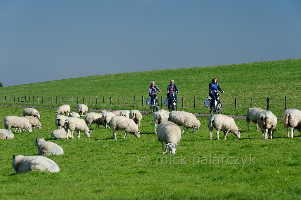 HOLLAND.FRIESLAND 30255] 'Cyclists west of Ferwerd'.