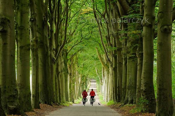 [HOLLAND.FRIESLAND 30171] 'Beech lane in Gaasterland.'