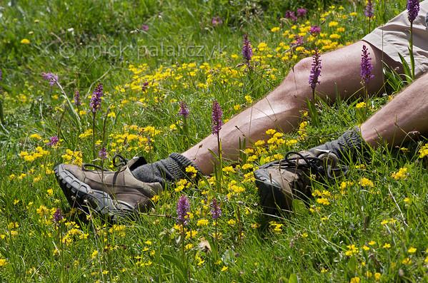 Hiker having a break among flowers.