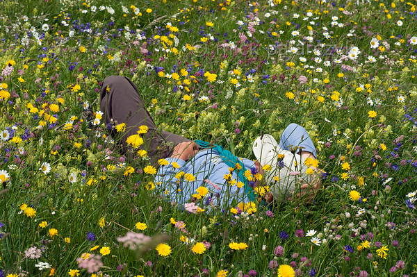Siesta in a flower field.