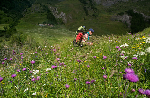 Hiker in flowering Alpine pasture.