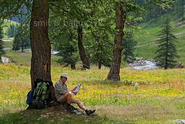 Hiker reading map in an Alpine pasture.