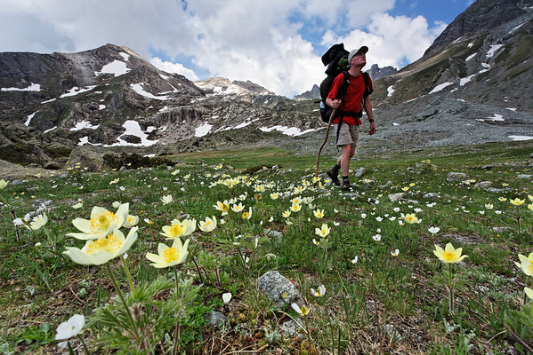 Hiker among alpine anemones.
