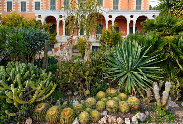 [ITALY.LIGURIA 28958] 'Cactus specimens near the Hanbury villa.'  Cactus specimens in front of the Hanbury villa. The globular cacti are Echinocactus grusonii. The Hanbury Botanical Gardens were created in 1867 when Sir Thomas Hanbury, holidaying on the Côte d'Azur , was struck by the beauty of Cape Mortola, near Ventimiglia, and began to purchase , piece by piece, part of the land which later amounted to eighteen hectares. Photo Mick Palarczyk.