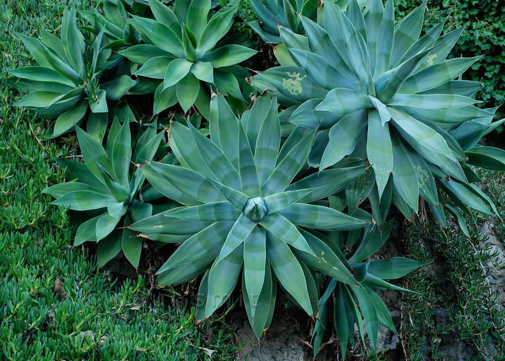 [ITALY.LIGURIA 29032]