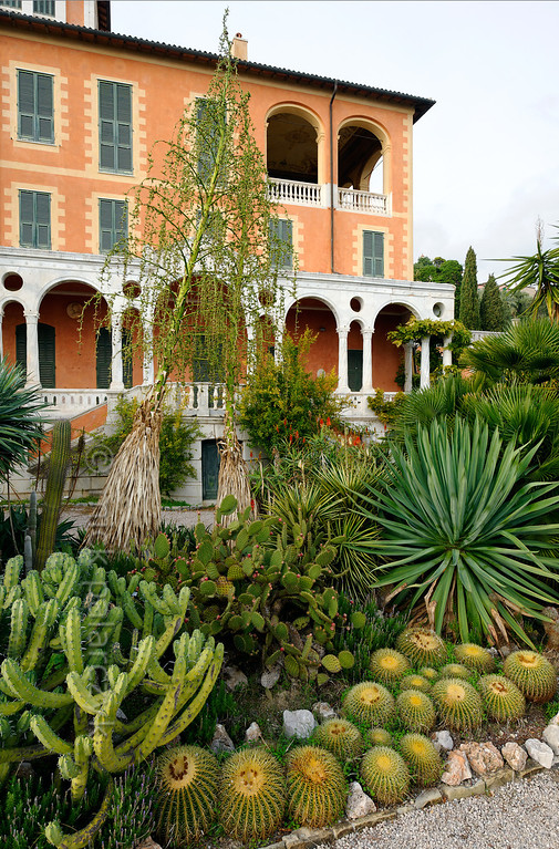 [ITALY.LIGURIA 28957] 'Cactus specimens near the Hanbury villa.'  Cactus specimens in front of the Hanbury villa. The globular cacti are Echinocactus grusonii. The Hanbury Botanical Gardens were created in 1867 when Sir Thomas Hanbury, holidaying on the Côte d'Azur , was struck by the beauty of Cape Mortola, near Ventimiglia, and began to purchase , piece by piece, part of the land which later amounted to eighteen hectares. Photo Mick Palarczyk.