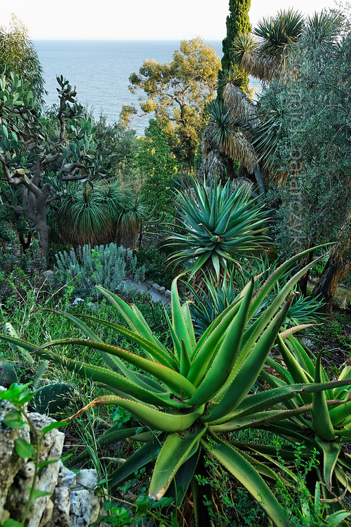 [ITALY.LIGURIA 29011]