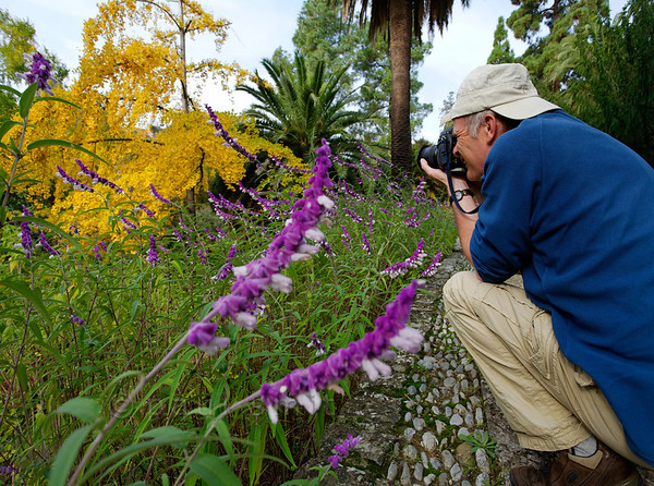 [ITALY.LIGURIA 28972] 'Photographing in Hanbury Gardens.'  A visitor is photographing the striking colour contrast between a ginkgo in yellow autumn garb and the purple flowers of Salvia leucantha at the Hanbury Botanical Gardens, located on the Côte d'Azur near Ventimiglia. Photo Paul Smit.