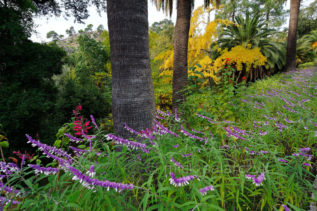 [ITALY.LIGURIA 28974]