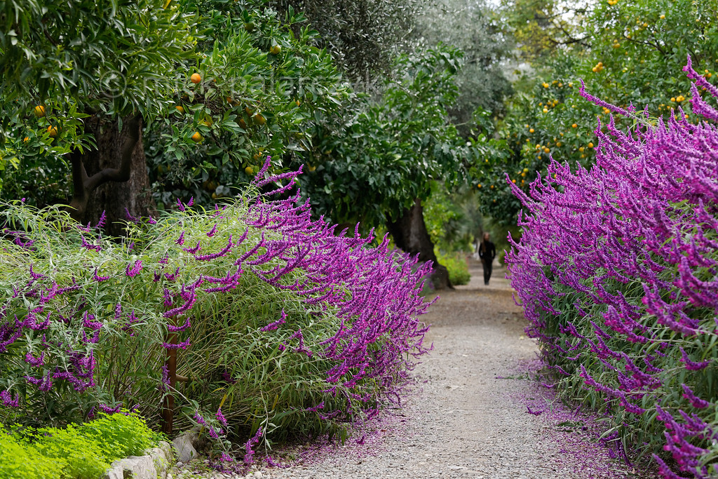[ITALY.LIGURIA 28991]