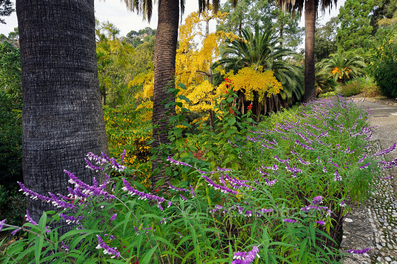 [ITALY.LIGURIA 28975]