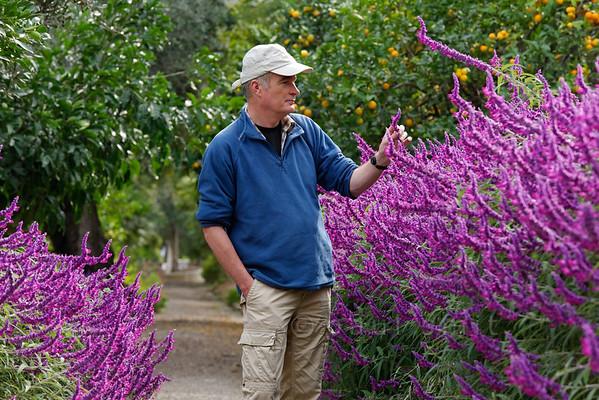 [ITALY.LIGURIA 28988] 'Salvia leucantha 'Purple velvet'.'  The purple flowers of Salvia leucantha 'Purple velvet' border the central avenue in the Hanbury Botanical Gardens, which are located on the Côte d'Azur near Ventimiglia. Photo Paul Smit.