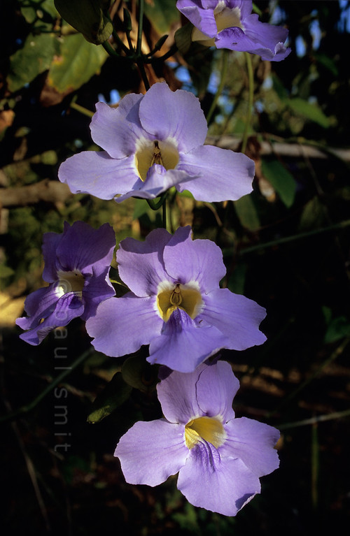 [ITALY.LIGURIA 29020]