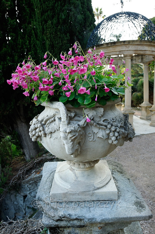 [ITALY.LIGURIA 29007] 'Vase with Oxalis in Hanbury Gardens'.'  Vase with Oxalis in the Hanbury Botanical Gardens. The gardens were created in 1867 when Sir Thomas Hanbury, holidaying on the Côte d'Azur , was struck by the beauty of Cape Mortola, near Ventimiglia, and began to purchase , piece by piece, part of the land which later amounted to eighteen hectares. Photo Mick Palarczyk.