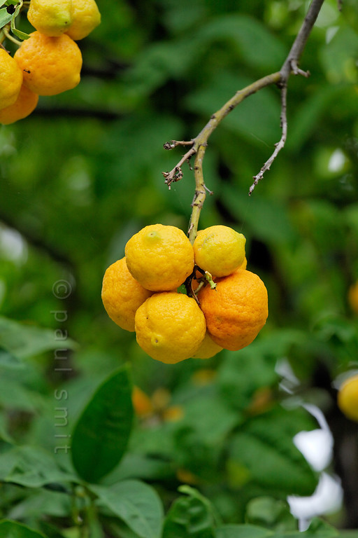 [ITALY.LIGURIA 29027]