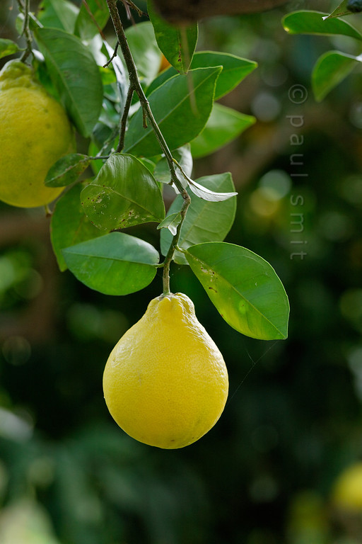 [ITALY.LIGURIA 29031]