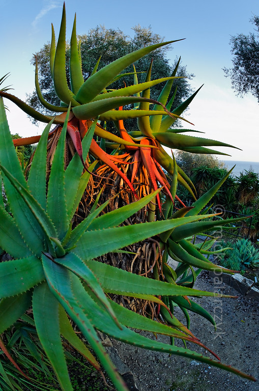 [ITALY.LIGURIA 29010]