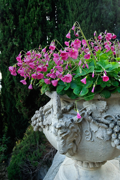 [ITALY.LIGURIA 29006]