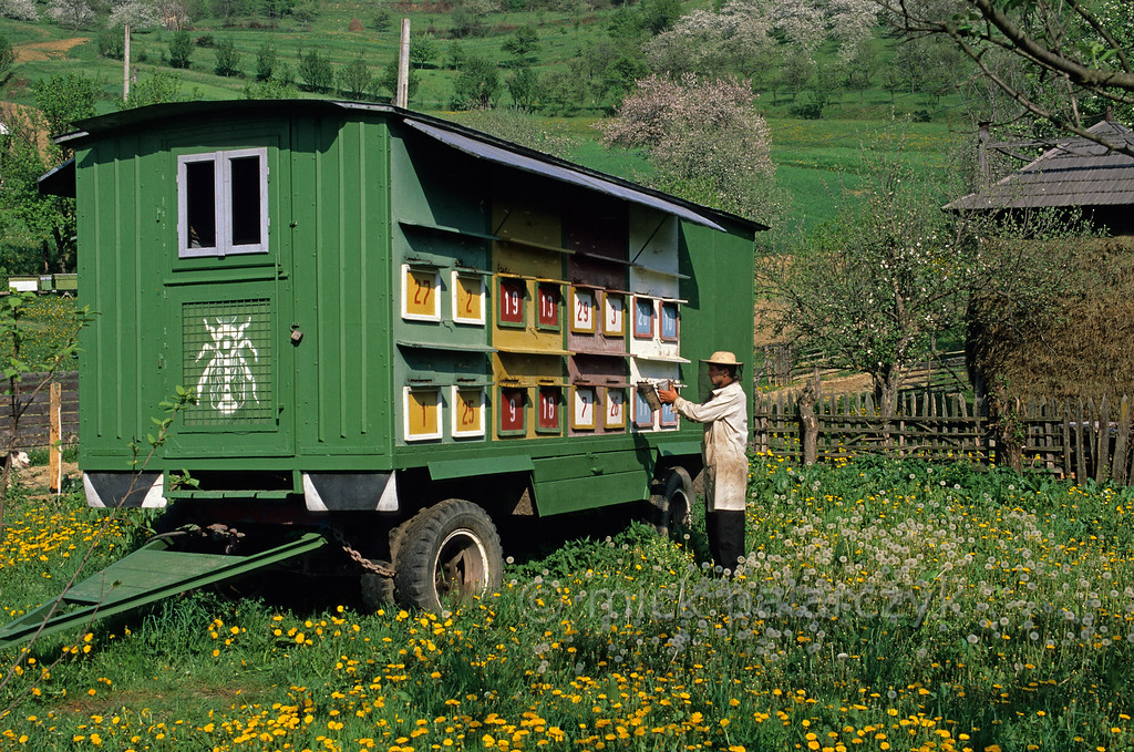 [ROMANIA.MARAMURES 23.885] 'Caravan-dwellers.'