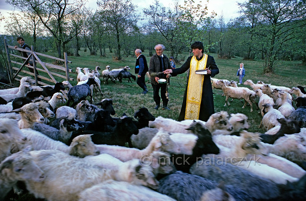 [ROMANIA.MARAMURES 23.870] 'Blessing the sheep.'  At the end of the Stîna or 'Measuring of the Milk' festival, a priest blesses the sheep of Hoteni village, while his verger holds the bowl with holy water and a small silver canister with incense. (See also previous pictures.) Photo Mick Palarczyk.