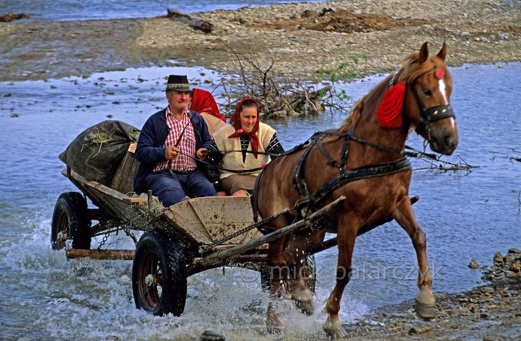[ROMANIA.MOLDAVIA 24.033] 'Crossing the river.'  Returning from the market at Gura Humorului a farmer crosses a tributary of the Moldova River. Photo Mick Palarczyk.