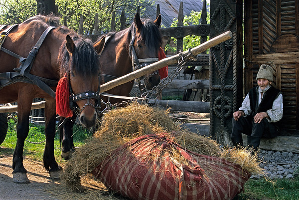 [ROMANIA.MARAMURES 23.729] 'Thread of Live.'  	While his horses are feeding this old farmer at Mara village is resting against a yard gate that has been decorated with heathen symbols such as the Thread of Live. Photo Mick Palarczyk.