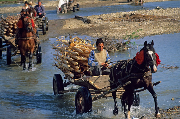 [ROMANIA.MOLDAVIA 24.023] 'Crossing the river.'  	Returning from the market at Gura Humorului and crossing a tributary of the Moldova these farmers transport stakes on which they will pile their freshly mown hay. Photo Mick Palarczyk.