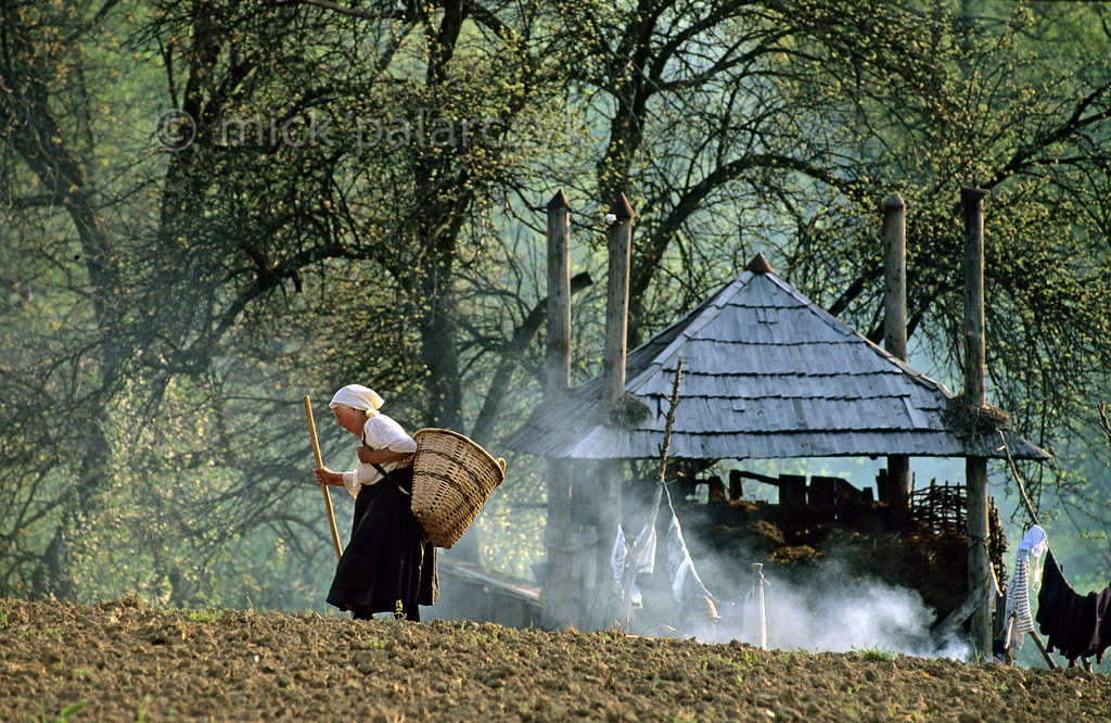 [ROMANIA.MARAMURES 23.827] 'Returning home.'