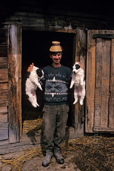 [ROMANIA.MARAMURES 23.669] 'Puppies.'  	Wearing a 'clop', the traditional headdress of the Maramures, this farmer's son proudly shows his puppies at the village of Sîrbi. Photo Mick Palarczyk.