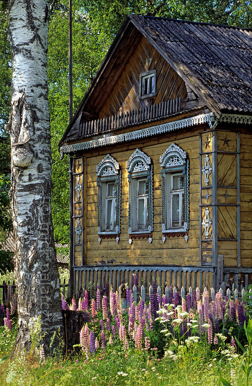 [RUSSIA.GOLDENRING 26.121] 'Countryside idyll.'  	In Babajevo village (45 km west of Rostov-Veliky) an Izba (traditional wooden house) surrounded by birch trees forms an archetypal Russian countryside idyll. Photo Mick Palarczyk.