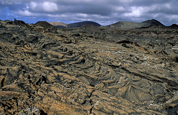 [SPAIN.CAN.LANZAROTE 9293] 'Rope lava.'  Pahoehoe lava, looking like ropes and named after the same kind of structures on Hawai. It is caused by streams of rather vicious lava flowing down the slopes. The Timanfaya national park is a dream for volcano lovers. Scientists observe how pioneer vegetation - like here the first lichens - conquer the lava after the last eruption in the 19th century. Photo Paul Smit.