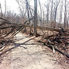 A downed tree spans TREC's Calico Trail after late February's severe weather.