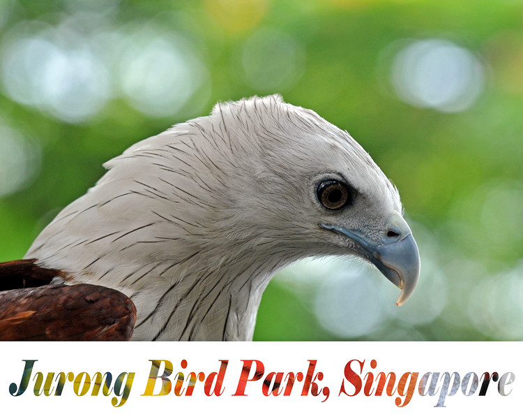 Took the D300 for the first few images to the Jurong BirdPark in Singapore.<br /> <br /> Jurong BirdPark is the largest in the Asia Pacific and the best in the world. Spread over 20 hectare it has a collection of more than 9,000 birds from 600 species  The Park has four aviaries including the world's largest walk-in aviary.
