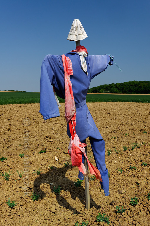[FRANCE.JURA 29109] 'Scarecrow north of Chancey.'  	A scarecrow guards a vegetable garden near Chancey, a village 30 km west of Besançon. Photo Mick Palarczyk.