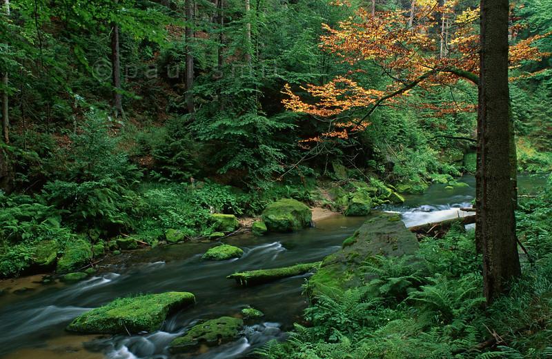 [CZECHIA.BOHEMIA.U 11004] 'Forest in Kamenice gorge.  Lush forest in the Kamenice gorge in Bohemian Switzerland, part of the České Švýcarsko National Park (Bohemian Switzerland National Park). Photo Paul Smit.