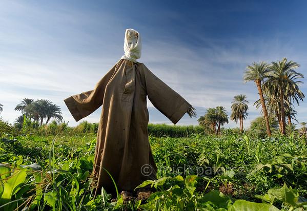 [EGYPT 30292] 'Scarecrow near Luxor.'