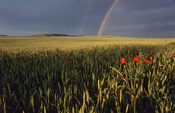 [GERMANY.THÜRINGEN 11021]  'Rainbow over the Thüringen plain.'  A large part of the state of Thuringia (Thüringen) consists of rolling plains, called the Thüringer Becken. It is a country of wheat and poppies. Photo Paul Smit.