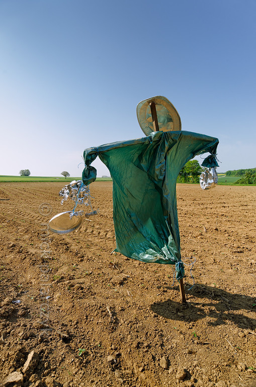 [FRANCE.JURA 29114] 'Scarecrow south of Chancey.'  	A scarecrow in a green robe guards a field near Chancey, a village 30 km west of Besançon. Photo Mick Palarczyk.