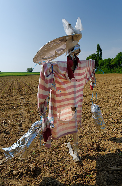 [FRANCE.JURA 29111] 'Scarecrow south of Chancey.'  	A scarecrow with an elongated hat guards a field near Chancey, a village 30 km west of Besançon. Photo Mick Palarczyk.