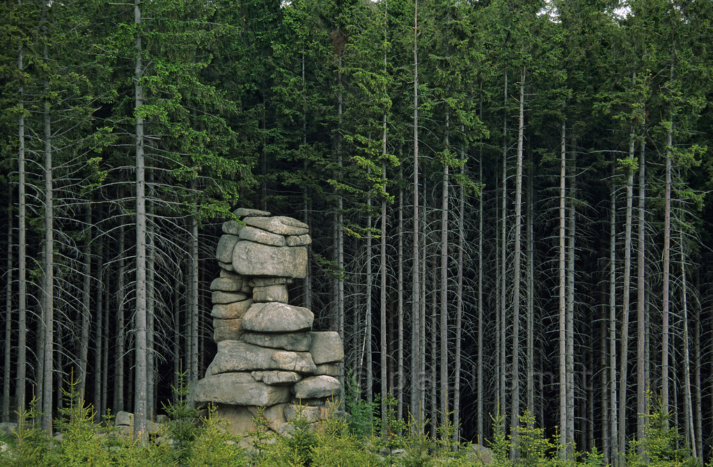 """[GERMANY.SACHSENANHALT 11005]  'Forest in Brocken National Park.'  The granite of the higher regions of the Brocken national park is weathered into peculiar cliffs, locally called """"klippen"""". Photo Paul Smit."""