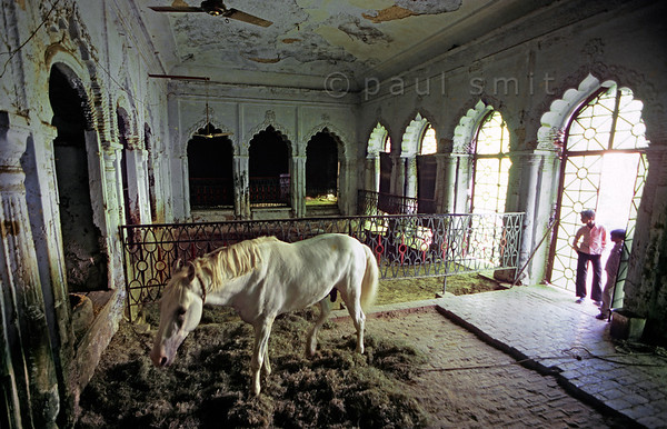[INDIA.UTARPRADESH 27187] 'Luxurious stable in Lucknow'  	A horse has his stable in an anex in the grounds of the Hussainabad Imambara in Lucknow. The complex was built in 1837 by Muhammad Ali Shah and contains his mausoleum. Photo Paul Smit.