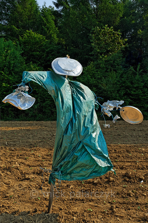 [FRANCE.JURA 29116] 'Scarecrow south of Chancey.'  	A scarecrow in a green robe seems to strut boisterously across  a field near Chancey, a village 30 km west of Besançon. Photo Mick Palarczyk.