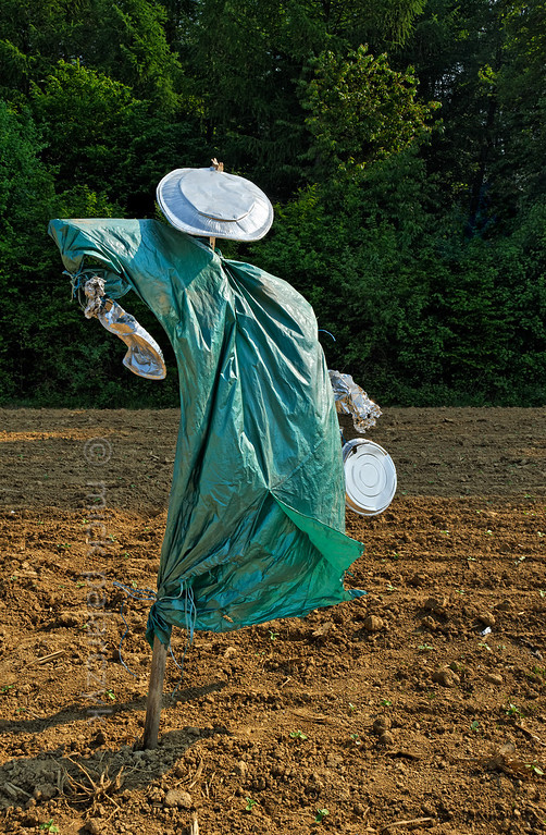 [FRANCE.JURA 29115] 'Scarecrow south of Chancey.'  	A scarecrow in a green robe seems to strut boisterously across  a field near Chancey, a village 30 km west of Besançon. Photo Mick Palarczyk.