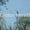 American Bald Eagle Perched high at Clinton Lawn Cemetery<br /> <br /> Photographer's Name: Mike Goddard<br /> Photographer's City and State: Clinton, IA