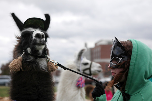 Sarah Casey, a freshman at Altamont High School, stares down Jett the llama before the Effingham Halloween Parade.